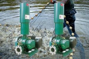 Dùng máy nào trong nuôi trồng thủy sản
